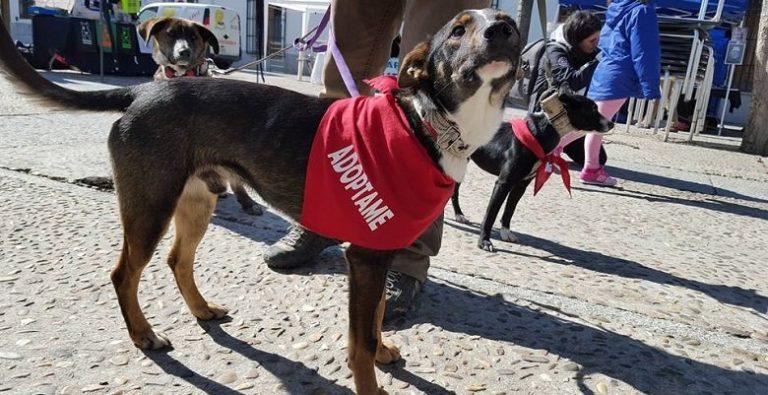 Villaviciosa, por la educación canina y la adopción de animales de compañía
