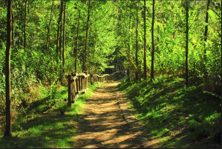 Forestal villaviciosa de don